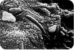 Nanometer nm